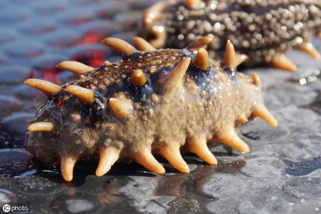 海参的哪些部位可以吃?