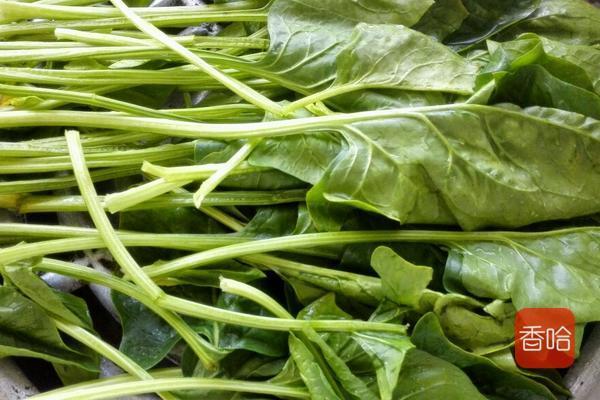 在菠菜的吃法中,这个做法是最健康的,少油少盐,做法简单味道香