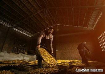 唐三镜张思漫:酿酒机器-生料酿酒与熟料酿酒的优缺点