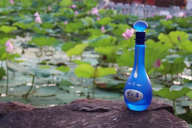 初夏的六月去哪玩,来洋河避暑吧,这里的美食美酒等着您