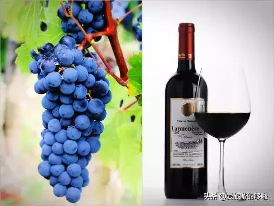 葡萄酒原产国很多,到底哪国酒好喝