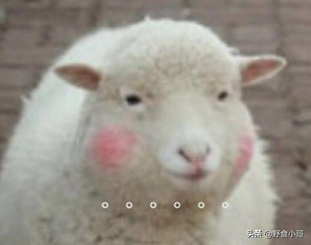 不能飞去新疆,怎么吃到一盘滋滋冒油的羊肉手抓饭?