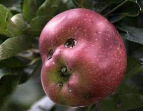 放飞自我的水果,南瓜长成了鸭子,苹果修炼成精了,模样好搞笑!