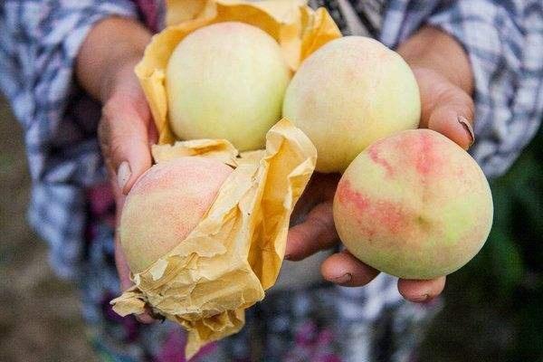 桃子怎么挑到甜的?老果农:认准这3点,桃子甜蜜又多汁